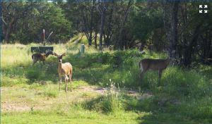 554 Mission Hill Run New Braunfels Texas 78132 - backyard