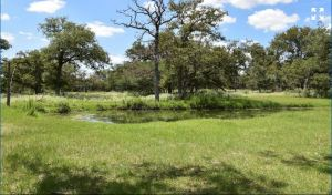 1190 Copperhead Drive Seguin Texas 78155 - stocked pond