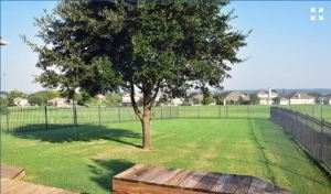 3717 Columbia Drive Cibolo Texas 78108 - backyard